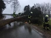 Baum über Straße_4